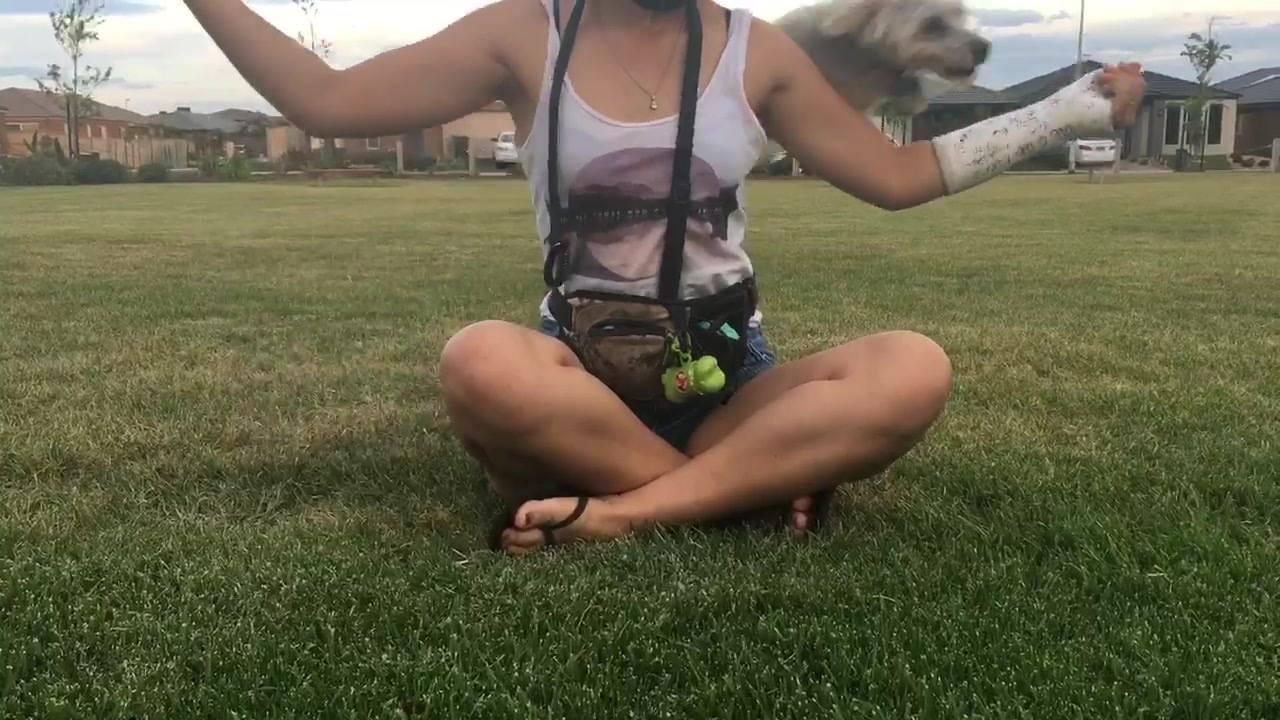 Cachorrinho brincando de pular o braço de sua dona