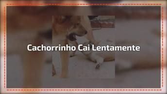 Cachorrinho Caindo Em Câmera Lenta, Ele É Uma Fofura De Cão!