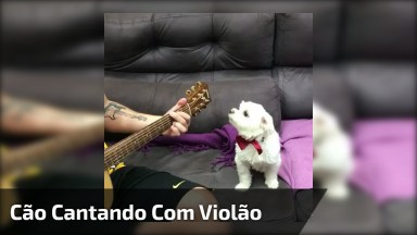 Cachorrinho Cantando Enquanto Alguém Toca Violão Para Ele!