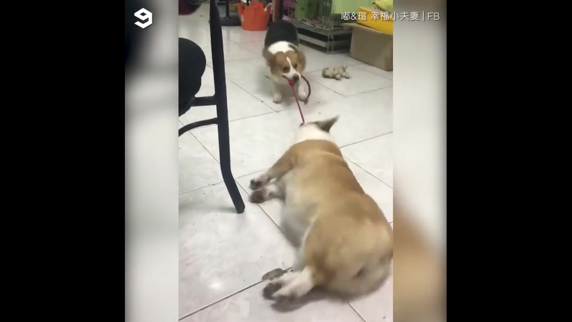 Cachorrinho chamando o outro pra brincar
