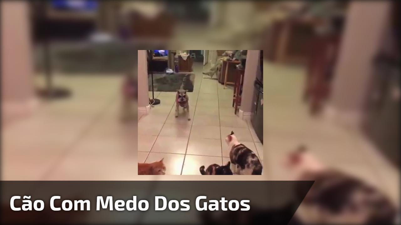 Cão com medo dos gatos