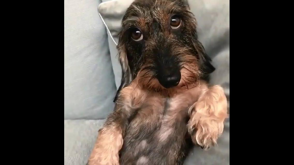 Cachorrinho cheio de dengo, olha só esta carinha fofa, que amor!!!
