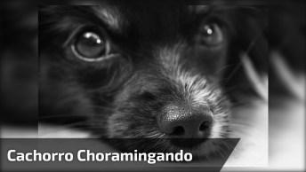 Cachorrinho Choramingando, Quem Aguenta Essa Fofura? Compartilhe!