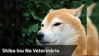 Cachorrinho Chorando Para Tomar Injeção, Olha Só Os Gritinhos Que Ele Da!