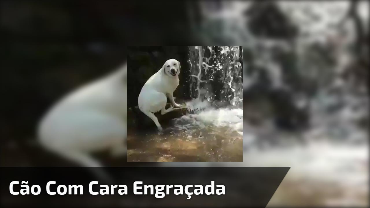 Cão com cara engraçada