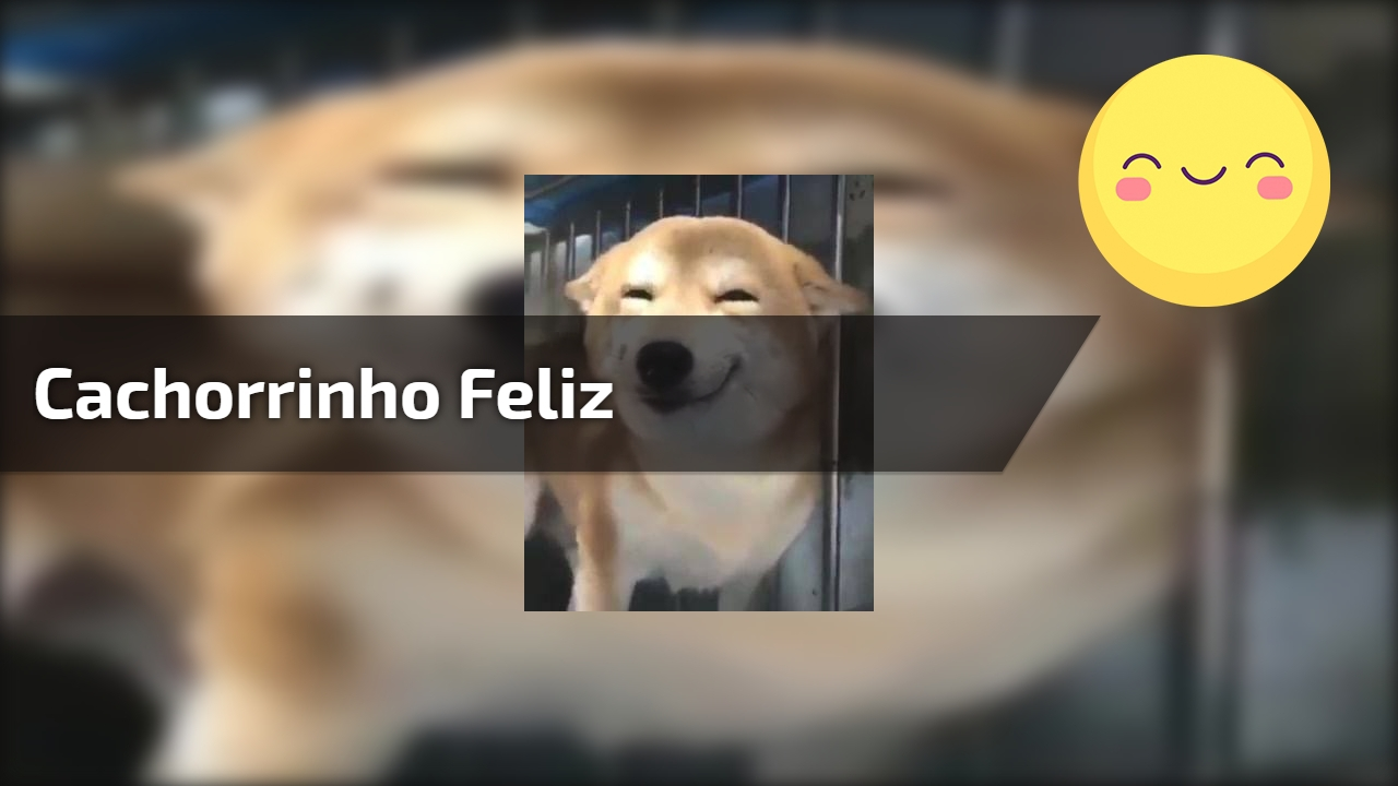 Cachorrinho feliz
