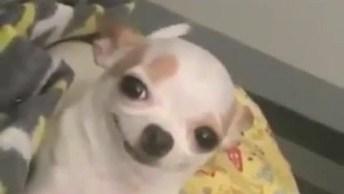 Cachorrinho Com Carinha Animada Para Sair Para Comer, Se Identifica?