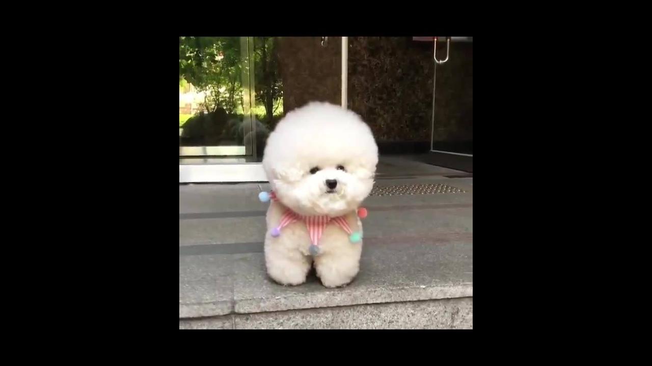 Cachorrinho com carinha de ursinho