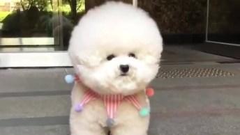 Cachorrinho Com Carinha De Ursinho, Olha Que Bolinha Linda!