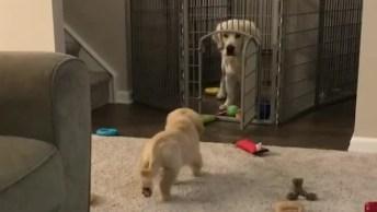 Cachorrinho Com Cautela Para Invadir O Espaço Do Outro, Confira!