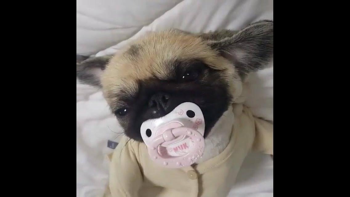 Cachorrinho com chupeta na boca e pijama