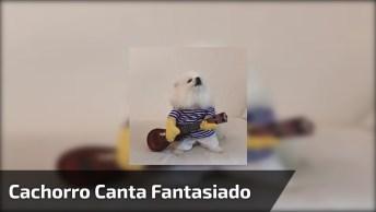 Cachorrinho Com Fantasia De Cantor, Olha Só Este Uivadinho Fofo!