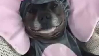 Cachorrinho Com Fantasia De Elefantinho, Preparado Para O Carnaval!