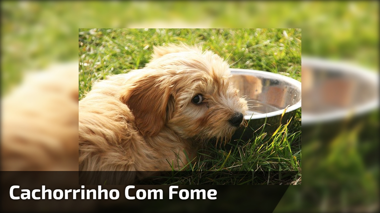 Cachorrinho com fome