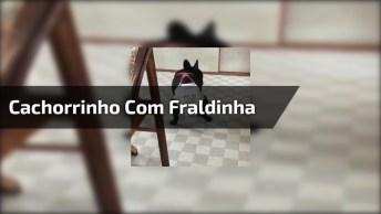 Cachorrinho Com Fraldinha Para Não Fazer Pipi Nos Moveis Da Mamãe!
