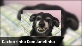 Cachorrinho Com Janelinha, Olha Só Que Simpático Este Amiguinho!
