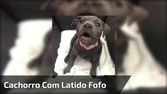 Cachorrinho Com Latido Mais Engraçadinho Chamando Atenção De Sua Mamãe!