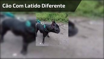 Cachorrinho Com Latido Mais Hilario Que Você Já Viu Na Vida!