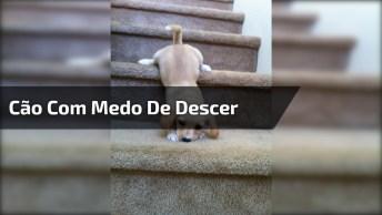 Cachorrinho Com Medo De Descer As Escadas, Veja O Que O Outro Cachorro Fez!