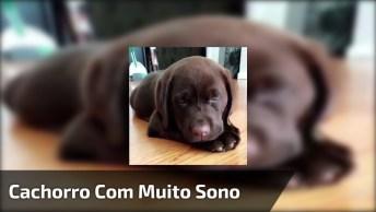 Cachorrinho Com Muito Sono, Olha Só Esta Carinha Dengosa Cheia De Amor!