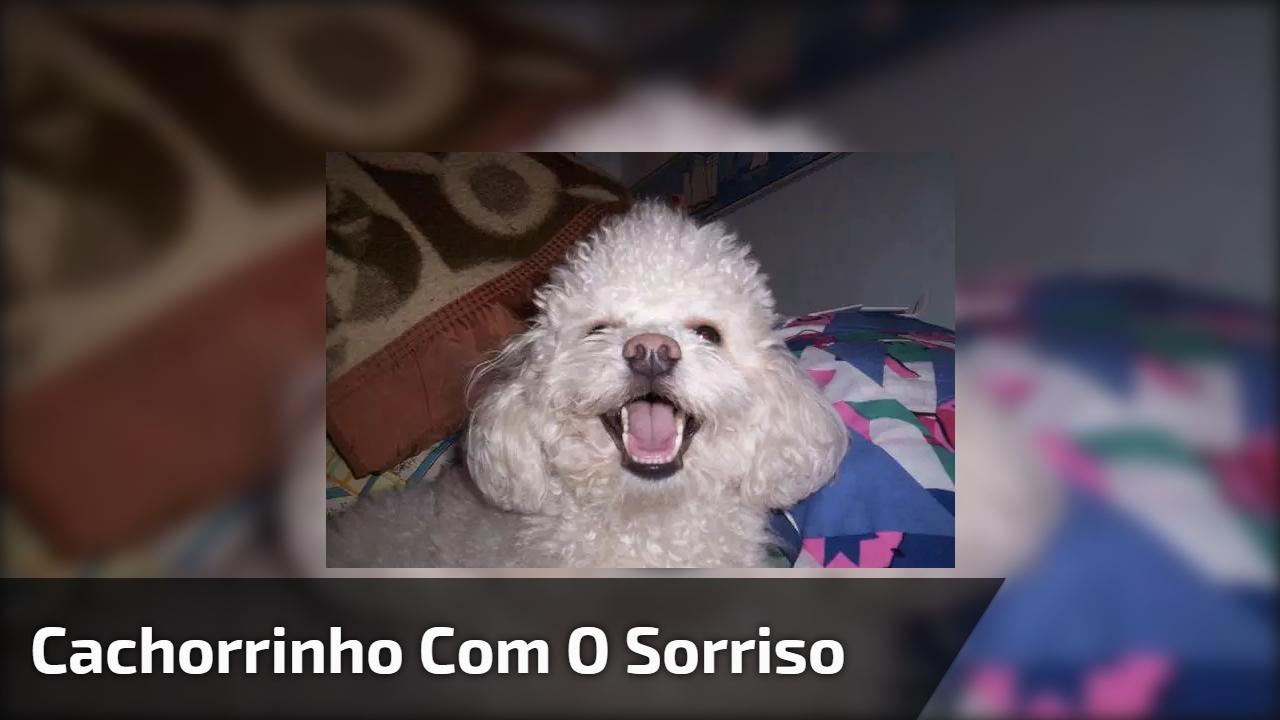 Cachorrinho com o sorriso mais lindo do mundo, que fofura!