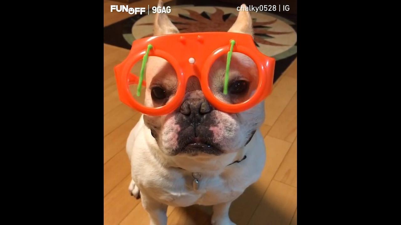 Cachorrinho com óculos divertido