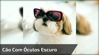 Cachorrinho Com Óculos Escuro E Relógio, Esse Ai É Invocadinho Hein!