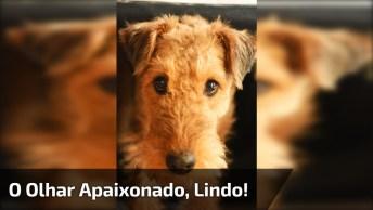 Cachorrinho Com Olhar Apaixonado, Que Cena Mais Linda Hein!