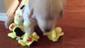 Cachorrinho Com Pantufas De Patinhos, Quem Aguenta Essa Fofura?