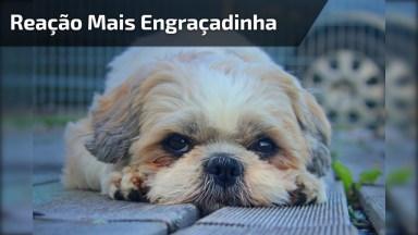 Cachorrinho Com Reação Mais Engraçadinha Que Se Possa Imaginar!