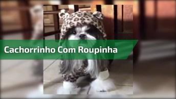 Cachorrinho Com Roupinha De Toquinha De Ursinho, Olha Só Que Fofura!