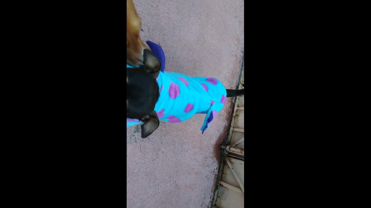 Cachorrinho com roupinha engraçadinha