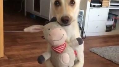 Cachorrinho Com Seu Brinquedo Favorito, Olha Só A Carinha Dele!