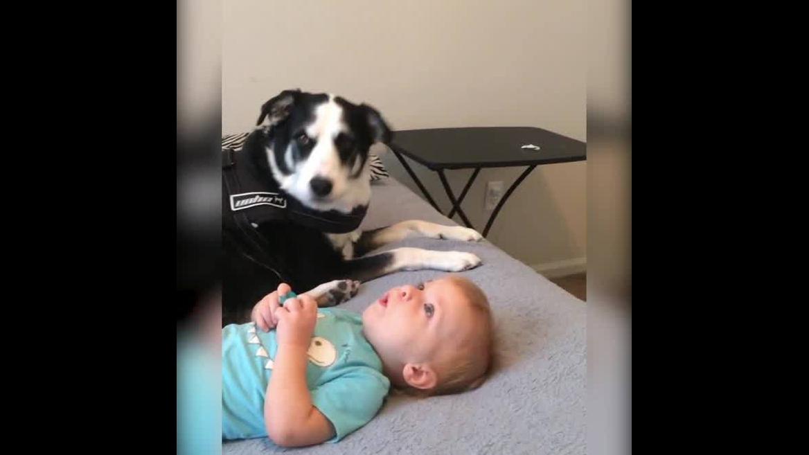 Cachorrinho com seu melhor amiguinho