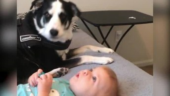 Cachorrinho Com Seu Melhor Amiguinho, É Muita Fofura Em Um Único Vídeo!