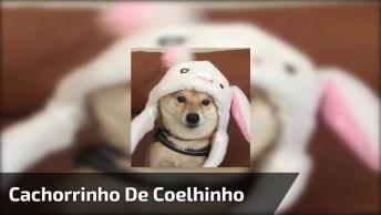 Cachorrinho Com Toquinha De Coelho, Olha Só Que Coisinha Mais Fofa!