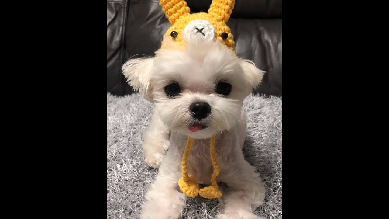 Cachorrinho com touca de bichinho