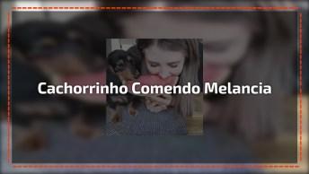 Cachorrinho Comendo Frutinha Com Sua Mamãe, Olha Só Que Fofo!