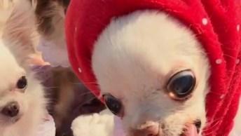 Cachorrinho Comendo Morango, Olha Só A Carinha Dela É Muito Fofinha!