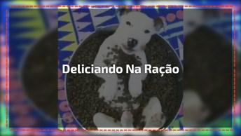 Cachorrinho Comendo Ração Dentro Da Própria Vasilha, Momento Ostentação!