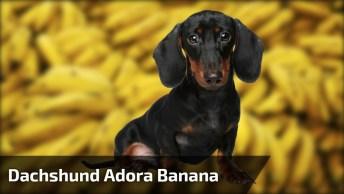 Cachorrinho Comendo Uma Bananinha, Olha Só Que Belezinha De Animal!