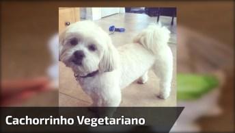 Cachorrinho Comendo Uma Folha De Alface, Olha Só Que Lindinho!