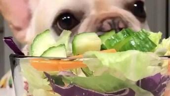 Cachorrinho Comendo Vegetal, Olha Só Que Coisinha Mais Fofinha!