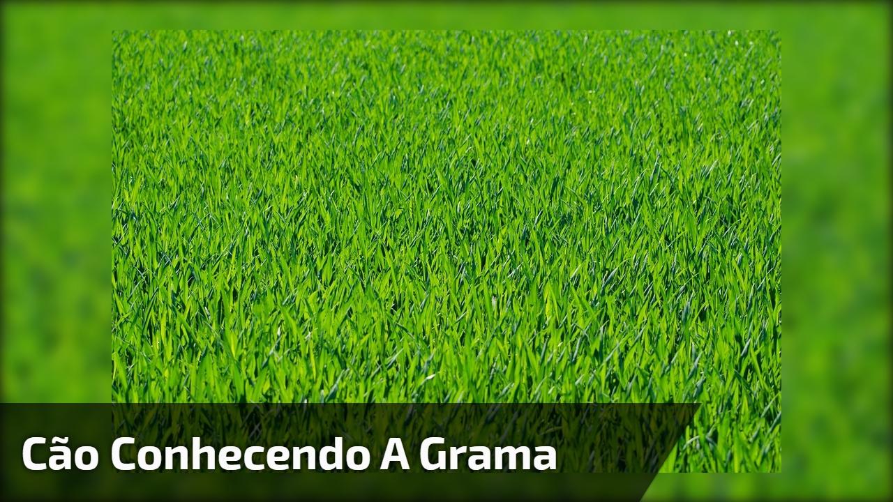 Cão conhecendo a grama