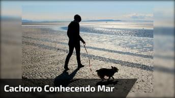 Cachorrinho Conhecendo A Praia Pela Primeira Vez, Olha Só Que Fofo!