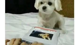 Cachorrinho Consegue 'Digitar' Mais Rápido Que A Humana, Confira!