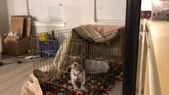 Cachorrinho Consegue Escapar Da Cerquinha Que Era Para Ele Ficar, Veja Como!