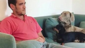 Cachorrinho Consolando O Papai Que Esta Fingindo Chorar, Que Fofura!