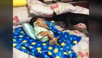 Cachorrinho Cuidando De Bebê, Confira O Que É Um Amor Incondicional!