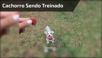 Cachorrinho Cumprindo Objetivos Para Ganhar Petisco, Que Delicia!